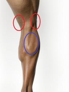 下腿三頭筋の起始