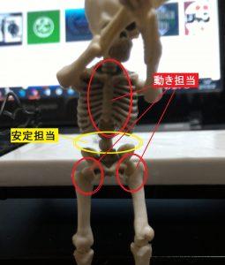 胸椎と腰椎と股関節