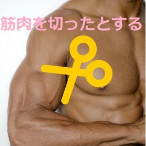 筋膜の説明