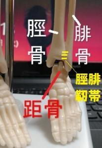 脛腓関節について