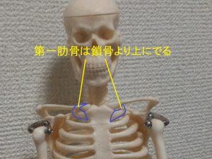 第一肋骨の場所