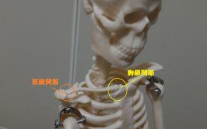 肩鎖関節と胸鎖関節