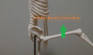 大腿骨の屈曲