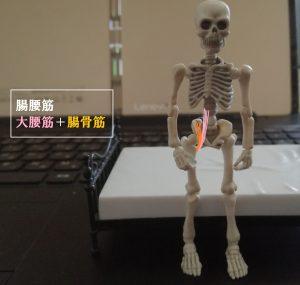 腸腰筋の走行