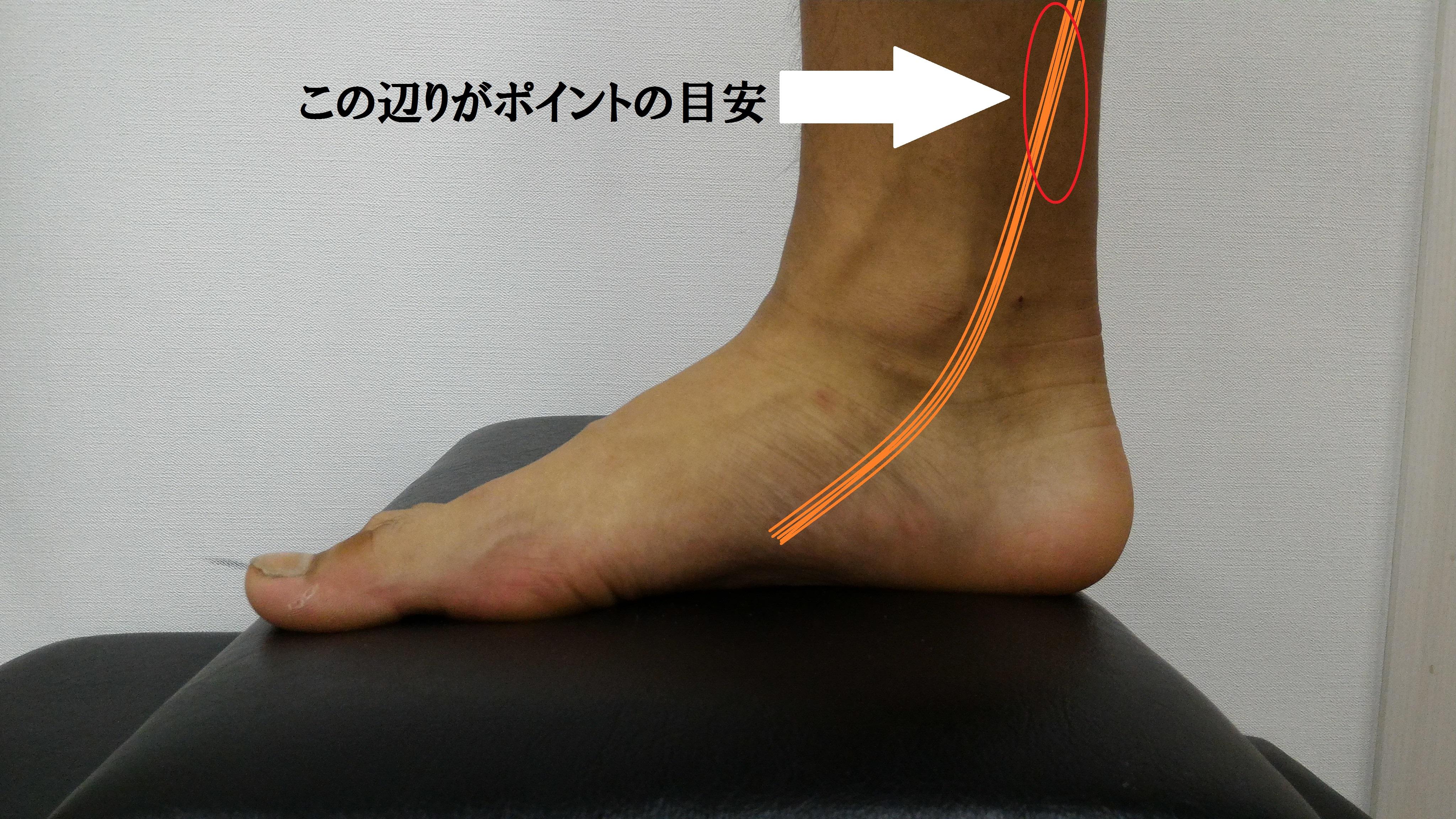 後脛骨筋のポイント